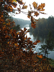 forest hike Karamzinu_Forest_vilnius_lithuania_neris