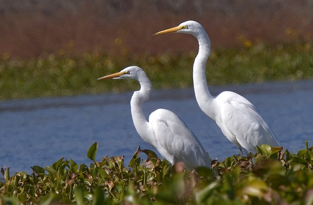 lithuania adventure white-egrets